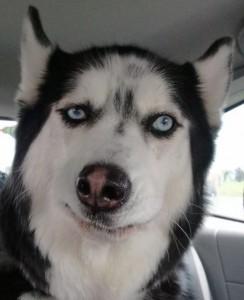 skeptical-dog-244x300